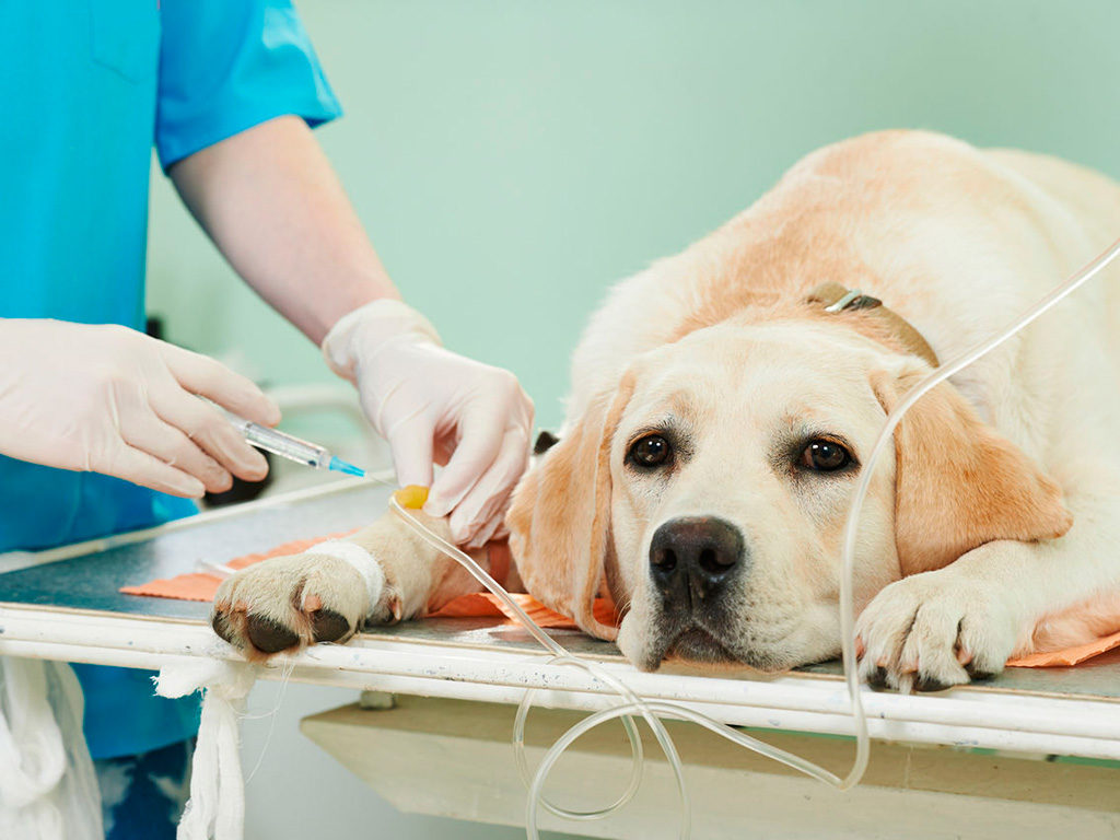 операция для кошки и собаки